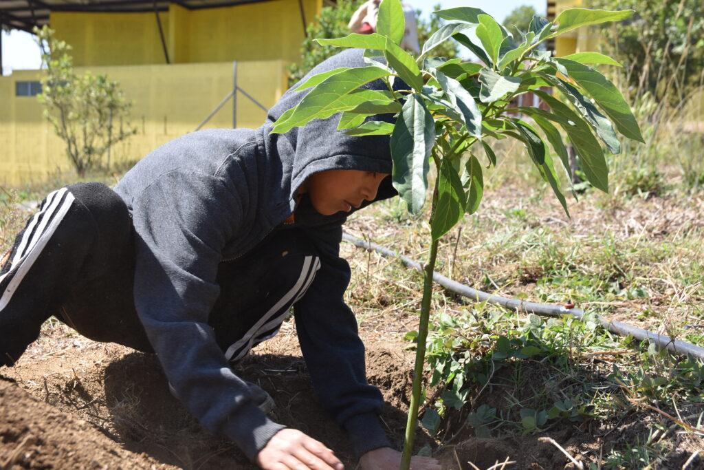 Kinder beim Pflanzen von Avocados