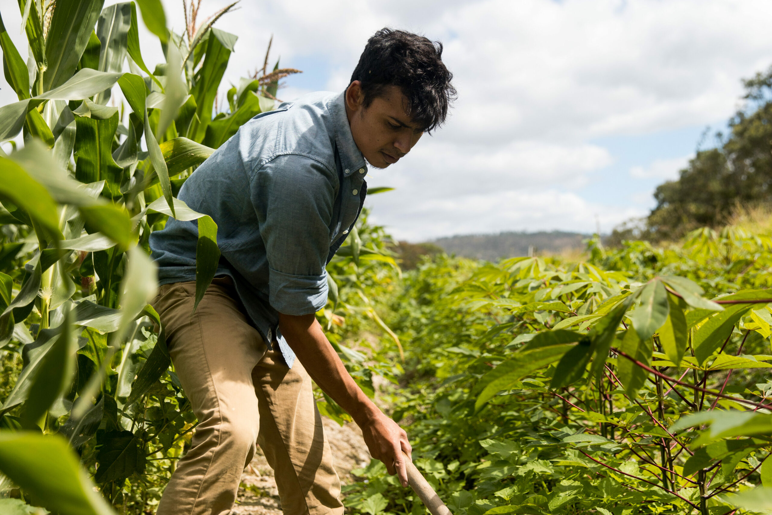 Jugendlicher im landwirtschaftlichen Dienst in Honduras