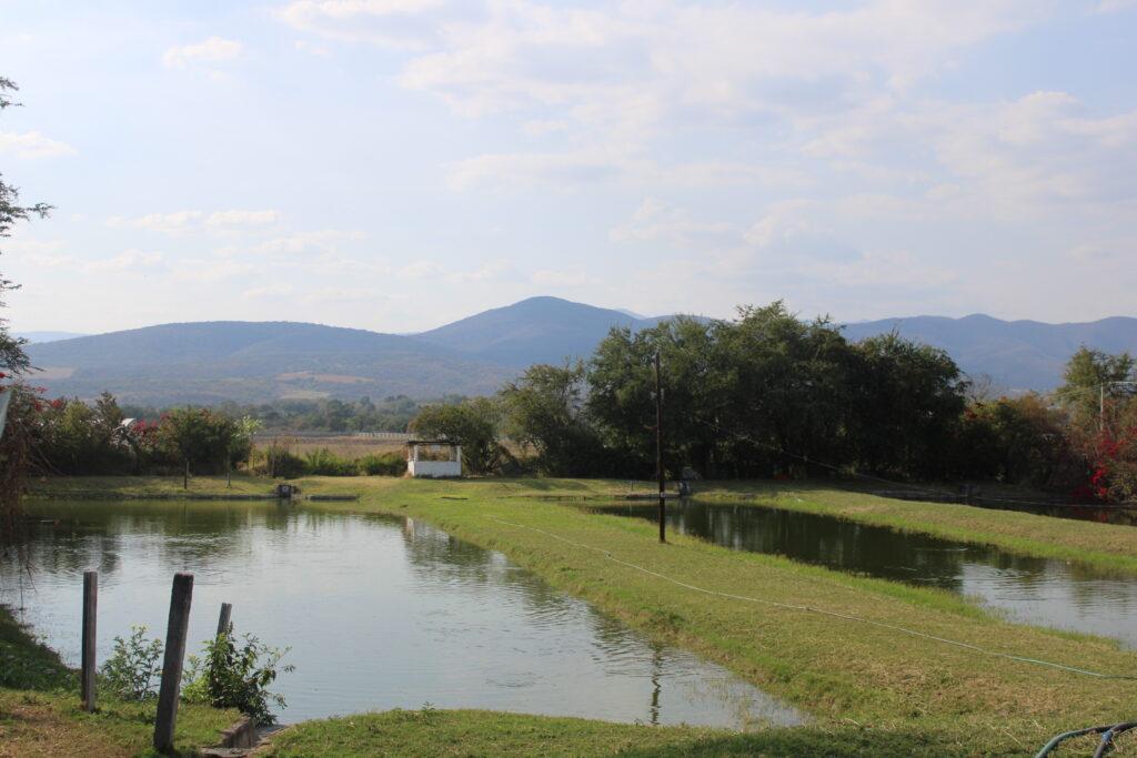 Tilapie Fisch-Teich